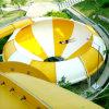 Скольжение шара космоса парка воды (ZC/DX/SB1)