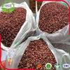 Pimenta chinesa de Sichuan da cinza espinhosa