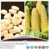 Cereale naturale Oligopeptides dell'estratto della proteina del cereale/polvere peptide del cereale con buona Acqua-Solubilità
