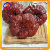 Ganoderma Lucidum Mushroom / Whole Fruit Body