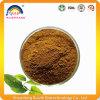 Extrait de thé vert de produit de soins de santé