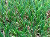 SGSによる高品質Landscaping Artificial Grass Approved