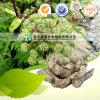 Angélica chinesa de Sinensis da angélica natural pura da medicina da erva