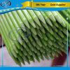 緑のファイバーガラスのプラント棒を削りなさい