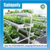 Парник профессиональной конструкции фабрики новой Hydroponic для овоща