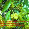 Acide normal pur de Shikimic d'extrait d'anis d'extrait d'anis pour le traitement de grippe aviaire