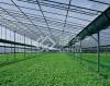 Gewächshaus-Polycarbonat-Höhlung-Blatt Folha tun Policarbonato hohles Blatt (YM-PC-025) für Baumaterial