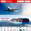 Agente de transporte de China/logística do transporte Freight/Professional