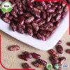 Obscuridade salpicada roxa chinesa orgânica dos feijões-roxos - feijões vermelhos