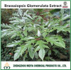 10:1 entier d'extrait de poudre de lame de Brassaiopsis Glomerulata d'herbe d'origine de la Chine pour des médecines