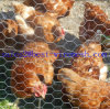 Rede de fio sextavada da torção reversa revestida de Galvanized/PVC, engranzamento de fio da galinha do aço inoxidável