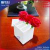 Teiler-Plexiglas-Blumen-Kasten des Weiß-3