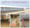 Automatisches Chicken Equipment in Poultry House From Super Herdsman