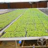 Seedbed do frame da liga de alumínio para a estufa agricultural