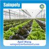La serre chaude de polycarbonate la meilleur marché pour le légume