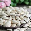 Цена семян тыквы чисто белого снежка Китая белое более низкое