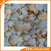 12 ' x12 de Goedkope Waterdichte Verglaasde Shell Tegel van de Vloer van Porcellanato van de Vorm Ceramische