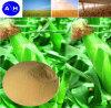 China-Berufsaminosäure-Fabrik reine Vetable Aminosäuren