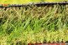 Дерновина травы горячей роскоши тона сбывания Tri садовничая поддельный