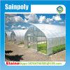 Estufa agricultural do túnel de Singel da privação clara para a venda/Invernadero Ecomomico