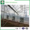 Serra della plastica di doppio strato di agricoltura
