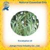Aceite esencial del eucalipto del extracto natural chino de la planta