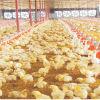 Equipo automático de la granja avícola de la alta calidad para la parrilla