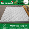 自然なCoconut Coir Fiber 8cm Thick Home Use Mattress