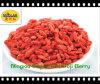 Bacca asciutta rossa del Ningxia Goji
