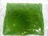 싼 인공적인 이끼 정원 녹색으로 훈장을%s 양탄자에 의하여 타전되는 폴리에스테 이끼 매트