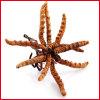 100% natürliche Mann-Gesundheits-vollkommene Kapseln mit Cordyceps
