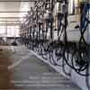 De Melkende Machine van de Visgraat van de Meter van de Melk van de Stroom van het landbouwbedrijf & Melkend Systeem met Schaal
