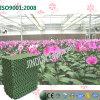 Pleine garniture verte de refroidissement par eau pour la plantation de serre chaude d'orchidée de guindineau