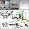 IDENTIFICATION RF Animal Identification Coil (bobine électromagnétique, bobine d'IDENTIFICATION RF d'Antenna)
