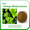 Extracto natural 24%Flavones de Biloba del Ginkgo