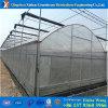 Estufa plástica da tampa da promoção de venda direta da fábrica para Angriculture