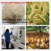 أرزّ بروتين وجبة 65% بروتين لأنّ تغطية حيوانيّ
