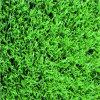 Hierba artificial del balompié durable de la W-Dimensión de una variable (W50)