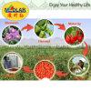 Inheemse Ningxia Organische Goji Wolfberry