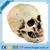 Polyresin Holloweenの恐怖の樹脂の頭骨ヘッド置物