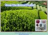Estratto naturale di 10:1 del tè verde dei polifenoli del tè