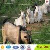 Engranzamento dos carneiros da cerca dos carneiros com tratamento de superfície galvanizada ou do PVC