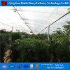 오이를 위한 중국 공장 저가 빛 박탈 필름 농업 온실