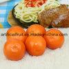 Modelo alaranjado artificial das laranjas