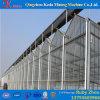 Ventilations-Plastikfilm-Gewächshaus für grosse Bereichs-Gemüse-Pflanze