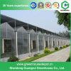 Invernadero multi agrícola de la hoja de la PC del palmo con precio de fábrica