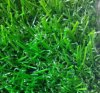 21mm Height 정원 Decoration Landscaping Artificial Turf