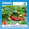Serre chaude solaire de couverture de Plastique-Film de marque de Sainpoly