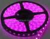 Uso dell'interno dentellare 12V della luce di striscia di colore LED 3528