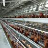 Gaiolas da galinha de Automtic para a exploração agrícola da camada